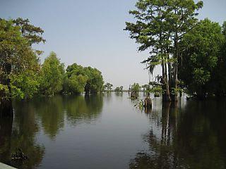 Atchafalaya Swamp
