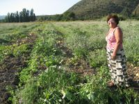 Señora Teresa in melon field 3
