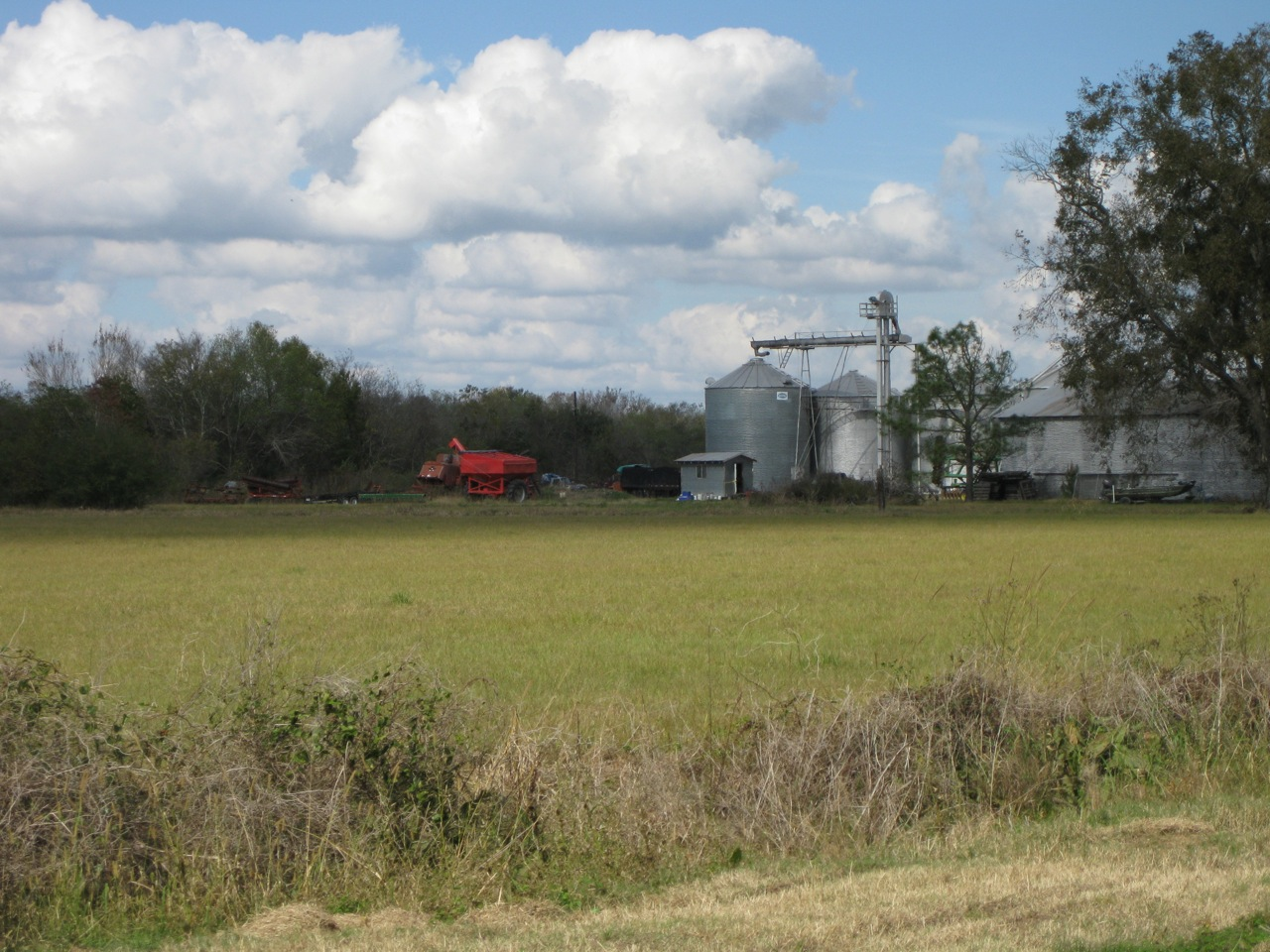 how-long-rice-mature-louisiana-naked-and-caged